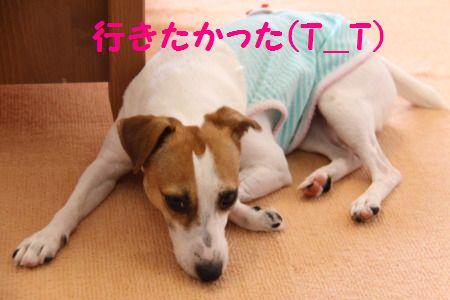 DPP_61_20100817000006.jpg