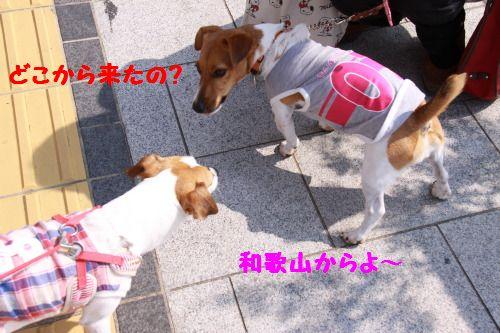 DPP_6_20111012212731.jpg