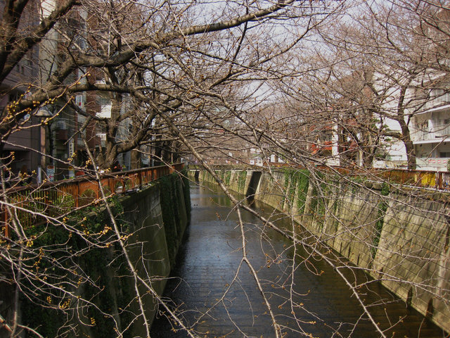 nakameguro001.jpg