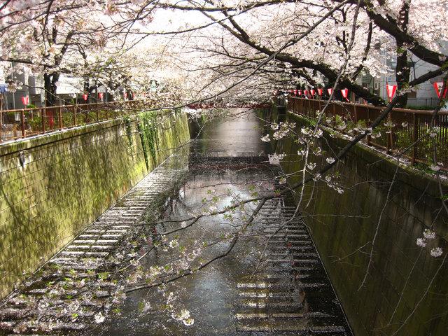 nakameguro015.jpg