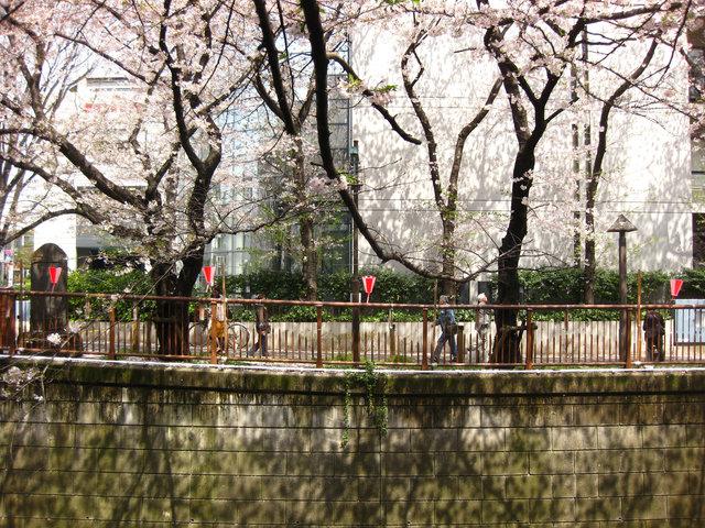 nakameguro016.jpg