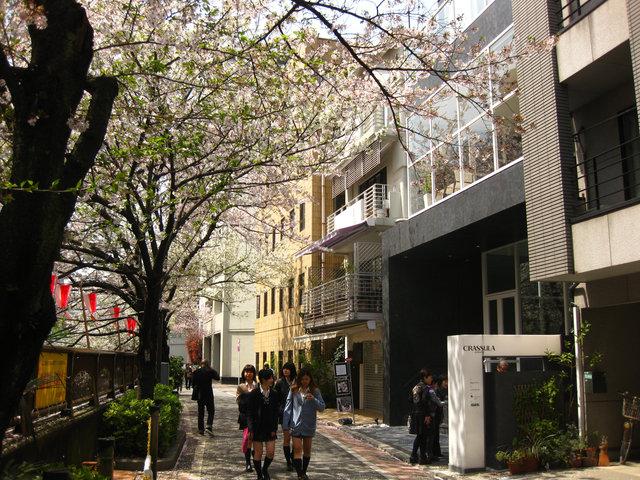 nakameguro018.jpg
