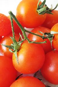 mini-tomato.jpg