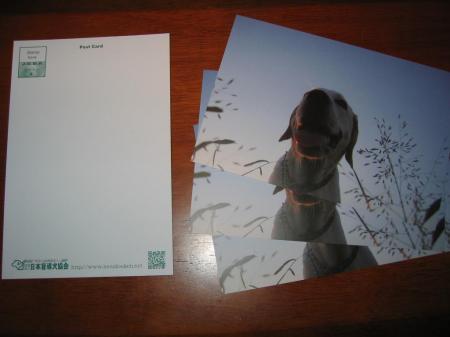 ステキなポストカードになりました♪