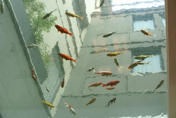 swim above_02