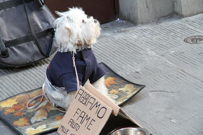 begging2.jpg