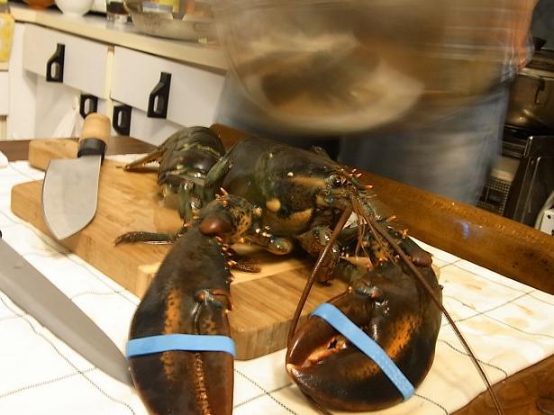 lobster_02.jpg