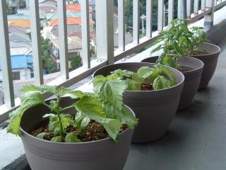 planter_vew02.jpg