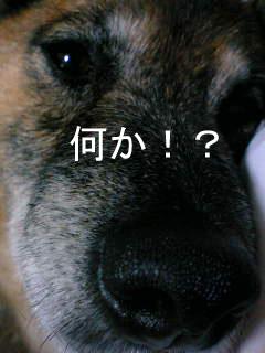 20070107002019.jpg