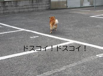 20070410001310.jpg