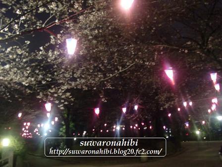 夜桜☆☆☆☆