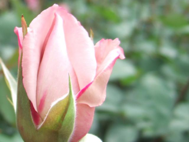 200905056.jpg