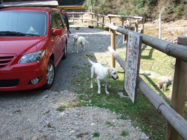 2009_0318sakura0053.jpg