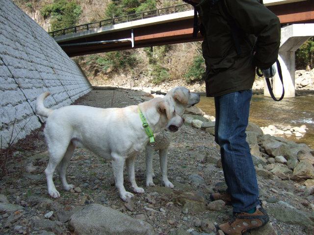 2009_0318sakura0069.jpg