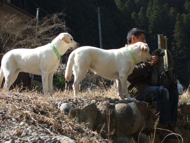 2009_0318sakura0078.jpg