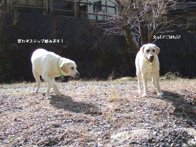 2009_0318sakura0096.jpg