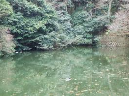 お稲荷さん池