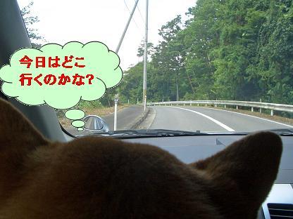 どこ行くかな・・・?