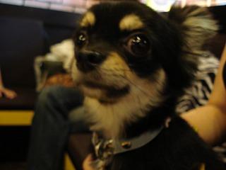 dogcafe2.jpg