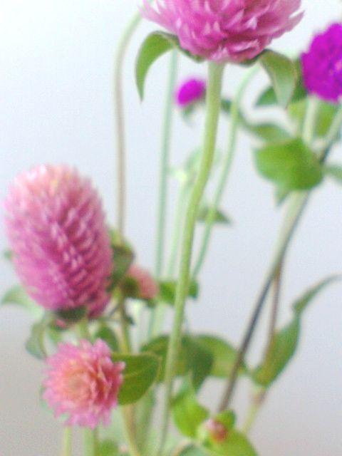 ぽんぽんのお花