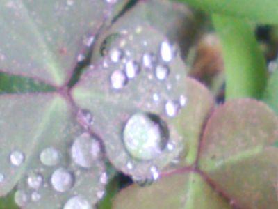 キレイなキレイな葉っぱ4