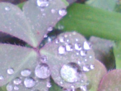 キレイなキレイな葉っぱ5