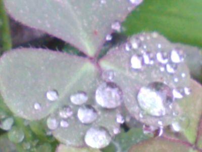 キレイなキレイな葉っぱ6