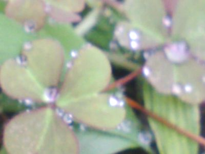 キレイなキレイな葉っぱ8