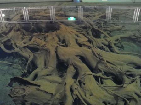 埋没林博物館 その3