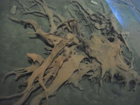 埋没林博物館 その5
