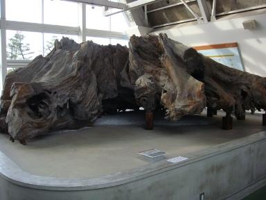 埋没林博物館 その7