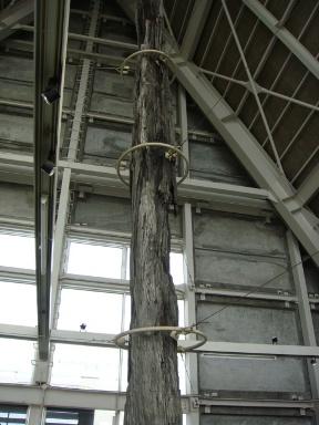 埋没林博物館 その8