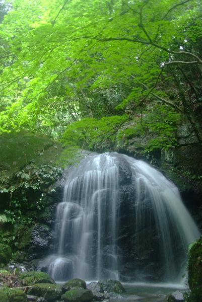 霧雨の小滝