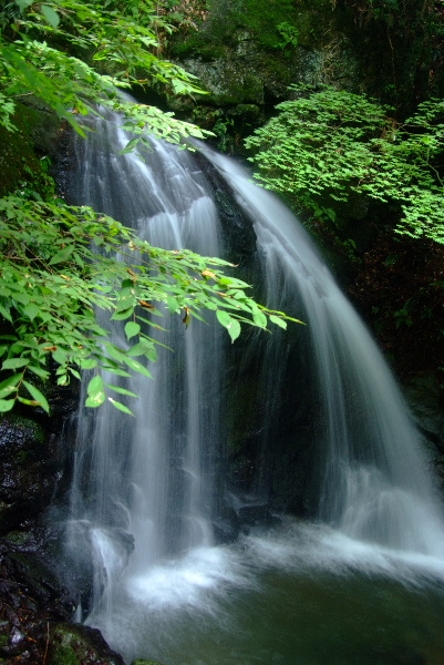緑美しい小滝