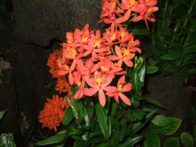 熱帯植物2