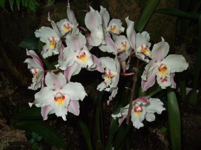 熱帯植物5
