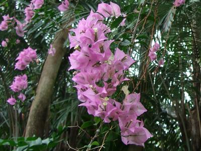 熱帯植物6