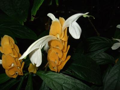 熱帯植物7