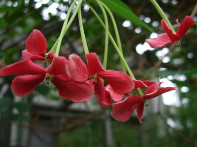 熱帯植物9