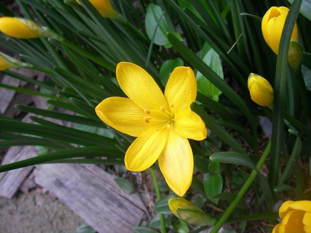 これって何の花