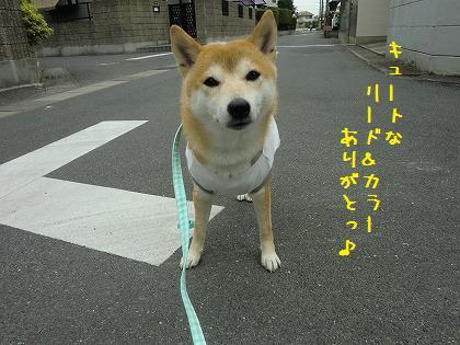 CIMG9969.jpg