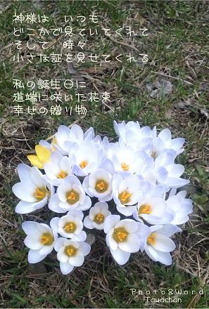 誕生日の花束ss