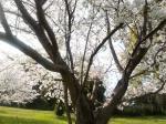 200903桜