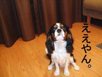3_20080829195928.jpg