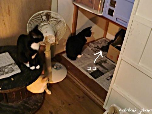 見守る3猫