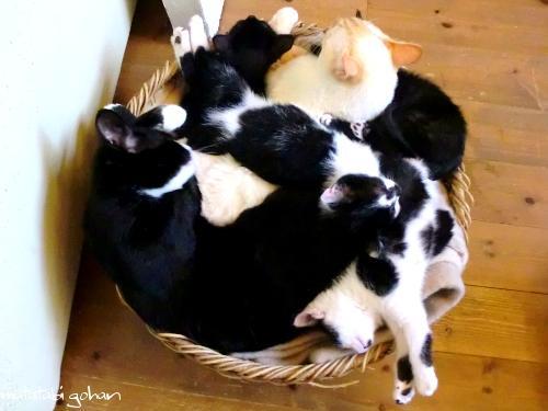 猫てんこ盛り