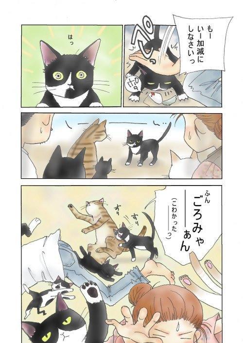 やすえ姉さんな猫3