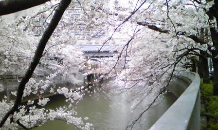 09meguroyori2.jpg