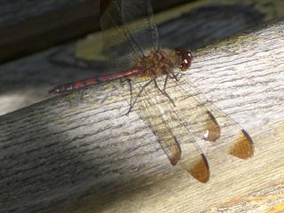 d-fly.jpg