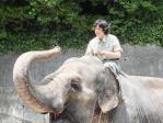 象のヨーコ調教中